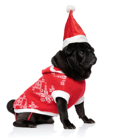 Concerned pug puppy looking to the side and being afraid while wearing a Christmas jacket and hat, sitting on white studio background