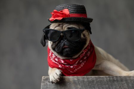 adorable pug laying down and resting on a wooden box, wearing a hat, a pair of sunglasses and a red bandana, looking to side on a grey background