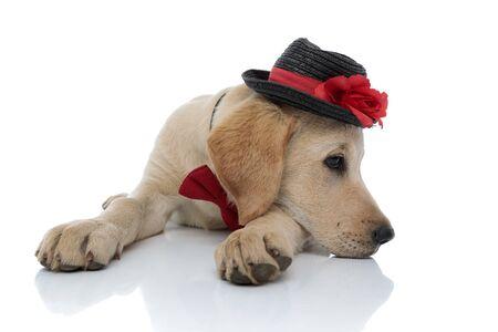 Trauriger süßer Labrador Retriever Welpe, der seinen Kopf auf den Pfoten ruht, während er auf weißem Hintergrund liegt. es trägt einen Hut und eine rote Fliege