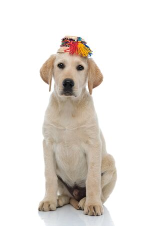 cute labrador retriever wearing traditional straw hat from Oas, Romania, sits on white background