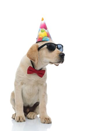 cute labrador retriever wearing red bow tie, sunglasses  and party hat, sits on white background looking to side