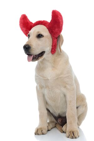 side view of a seated cute labrador retriever puppy wearing devil horns for halloween on white background