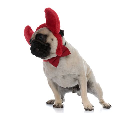 Curious pug stepping while wearing devil horns and a red bowtie on white studio background Stock fotó
