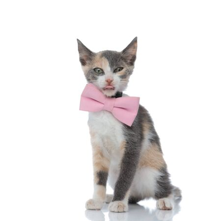 Sleepy cat looking forward with its tongue exposed while wearing a pink bowtie and sitting on white studio background
