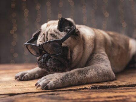 side view of a sad pug dog wearing sunglasses lying down on gray background