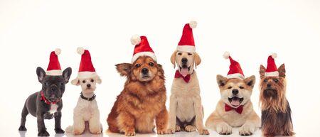 Grupo de adorables perros de santa en una fila sobre fondo blanco. Foto de archivo
