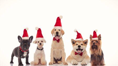 Adorable grupo de pequeños perros de santa claus celebrando la Navidad sobre fondo blanco. Foto de archivo