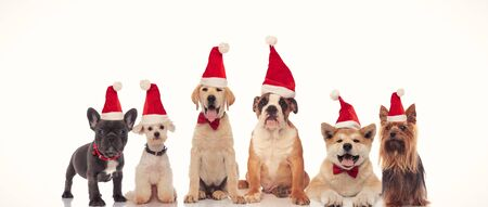 6 happy dogs celebrating christmas together on white background