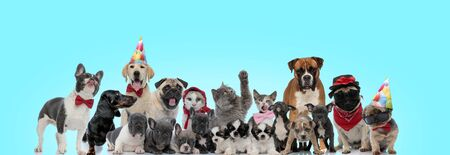 group of happy dogs and cats standing together on blue background