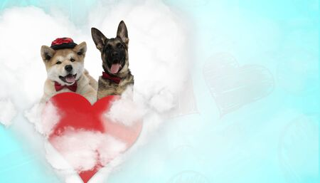 cute akita inu dog wearing hat with bowtie next to a german shepherd dog panting happy above heart on blue background