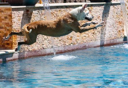 Hond duiken aan de zijkant van het zwembad en verliest evenwicht