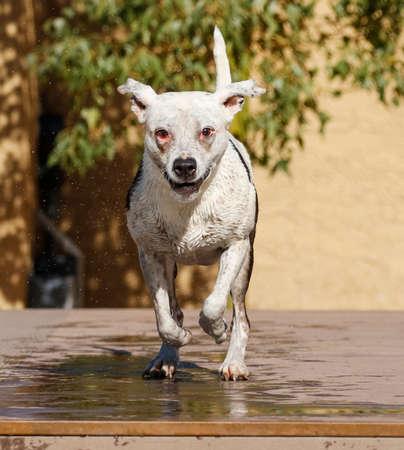 Witte hond glimlachen als ze in de haven loopt