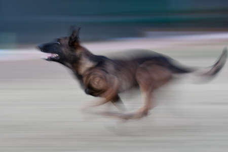 Slow shutter blur photo of a dog running Stock Photo