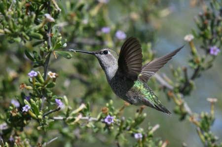 Green hummingbird feeding on a tree