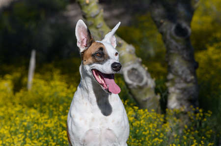 Close up of a dog in the wildflowers Imagens