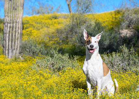 Dog posed by super bloom wildflowers Imagens