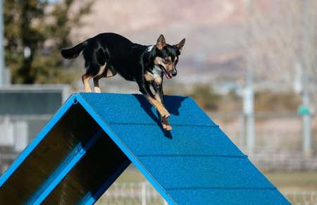Dog doing agility going over an a-frame