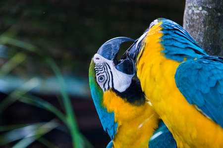 Colores guacamayo grande es brillante photo
