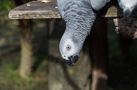 Parrot african grey Stock Photo - 24353684