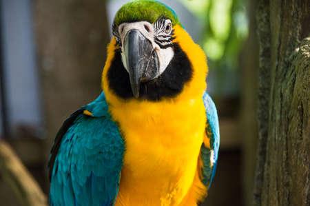 Big parrot macaw closeup photo