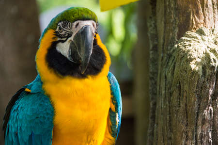 Big parrot macaw closeup in the afternoon photo