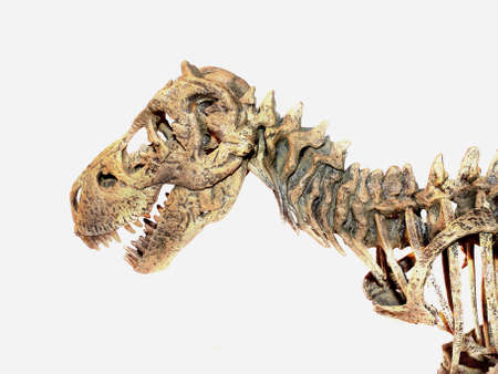 Small-scale model van Tyrannosaurus Rex