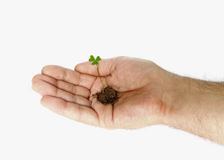 Plant in hand isolated on white background Stock Photo - 3920291