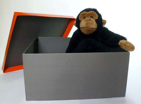 Black gift box with a adorable fluffy monkey inside isolated on white photo