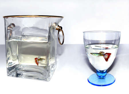 guppies: Ice bucket and goblet with fishes swimming inside