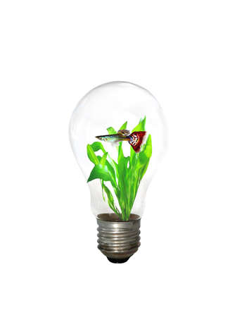 aquarist: Electric light bulb as a fish tank isolated on white