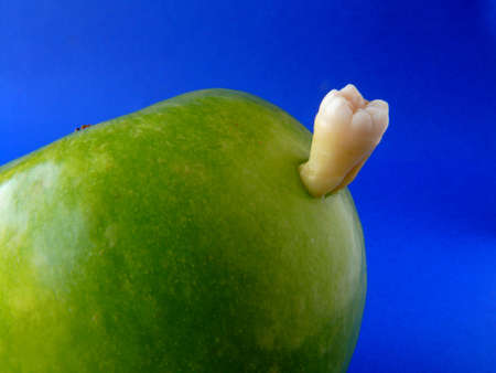 Real molar inside a green apple isolated on blue photo