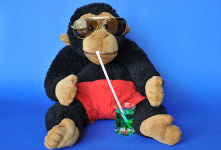 Funny scene: fluffy monkey with sunglasses sipping drink