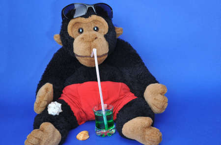 Beach time: fluffy monkey with sunglasses sipping drink  Stock Photo