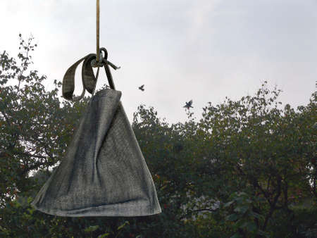 persimmon tree: A sack hanging in a field