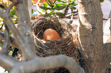 Bird's nest with big egg inside in horizontal Stock Photo - 4560426