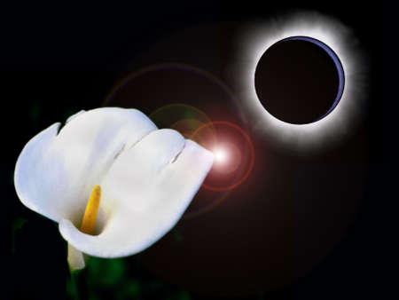 Abstract: a calla beneath eclipse  photo