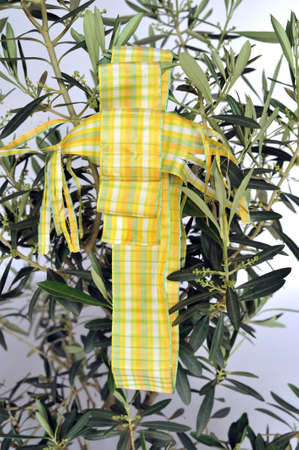 Abstract: decorative ribbon shaped as a crucifix hanging down an olive-tree  photo