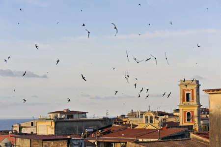 Zwerm zwaluwen skimmings over zee-land daken bij zonsondergang Stockfoto