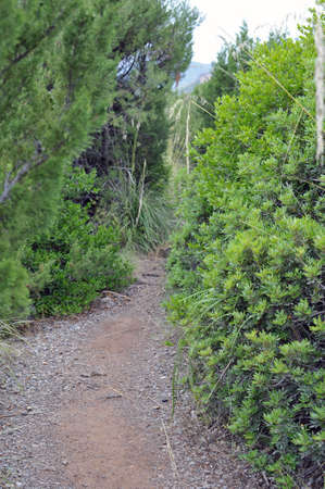 brushwood: Path among vegetation to the mountain, Salerno, Italy