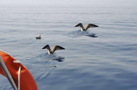 seawater: Seagulls landing up seawater on high seas Stock Photo
