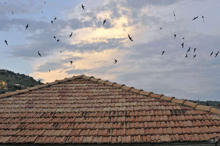 Detail of rustic tile hip roof with flock of swallows in the sky at dawn photo
