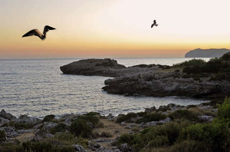 Sunset on Cilento coast with seagulls flying, Italy photo