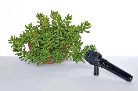 Resumen: una entrevista c�mica con una planta Foto de archivo - 5646117