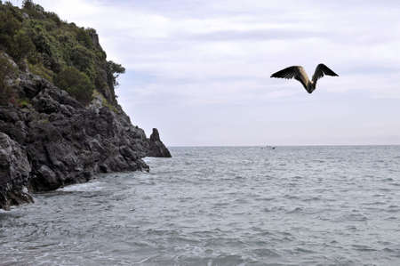 Sea coastline view with horizon and gull in flight, Cilento, Italy Stock Photo - 5723978