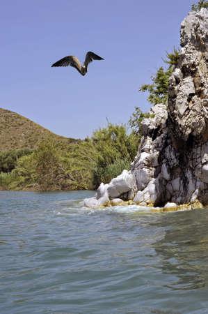 palinuro: Characteristic coastline with seagull, Palinuro,  Italy