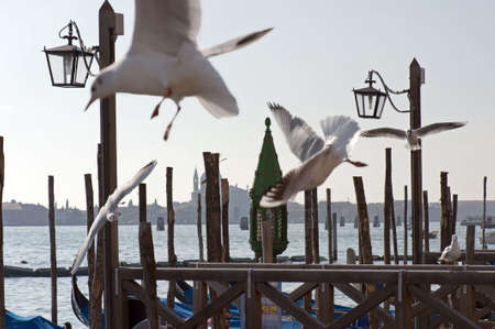Saint Mark�s Jetty with seagulls, Venice, Italy photo