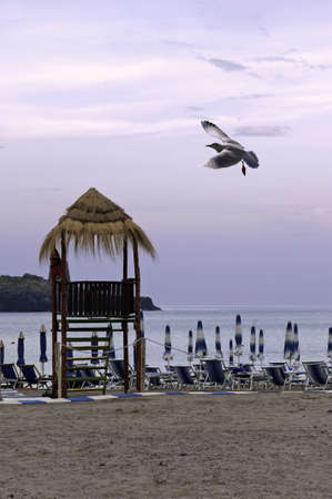 Seagull flying over the beachfront at dawn photo