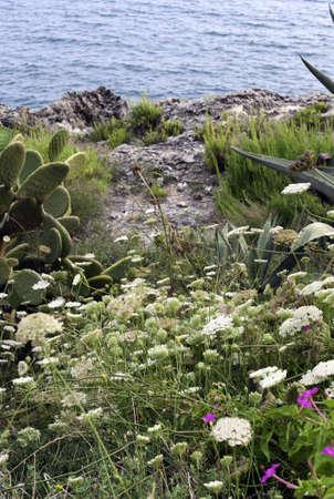 seacoast: Characteristic Mediterranean flora along the seacoast