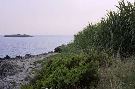 bracts: Wild Mediterranean flora along the south seacoast