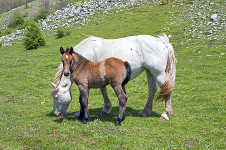 Countryside: A horse with her foal in a meadow